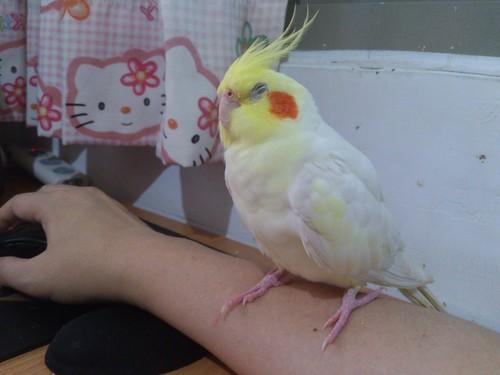 粉圓在手臂上睡著了