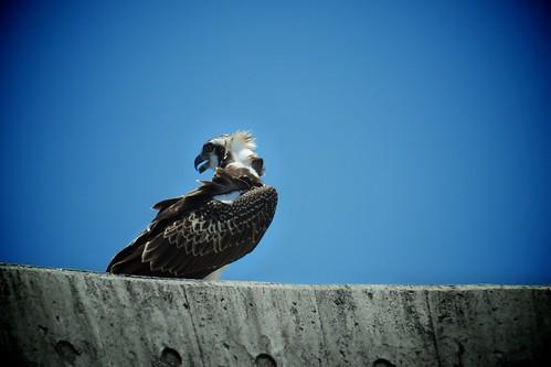 鳥を撮りました