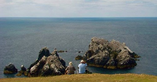 Watching the Alderney Gannet Colony