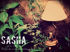 Sasha Poster 4
