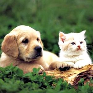 precious pet pics 10,000+ views