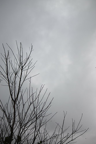 Cloudy day, pretty trees (21)