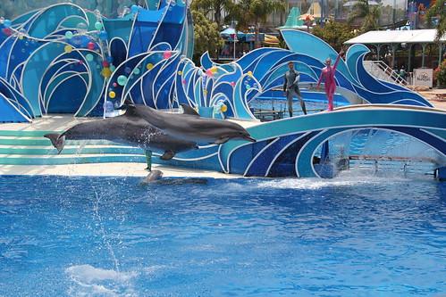 Dolphin in mid-flight