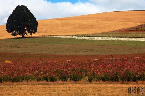paisagem Oregon EUa