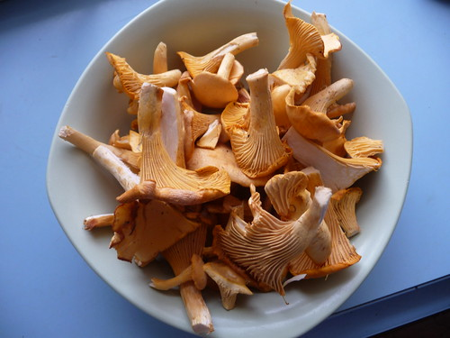 Chantrelles prepped