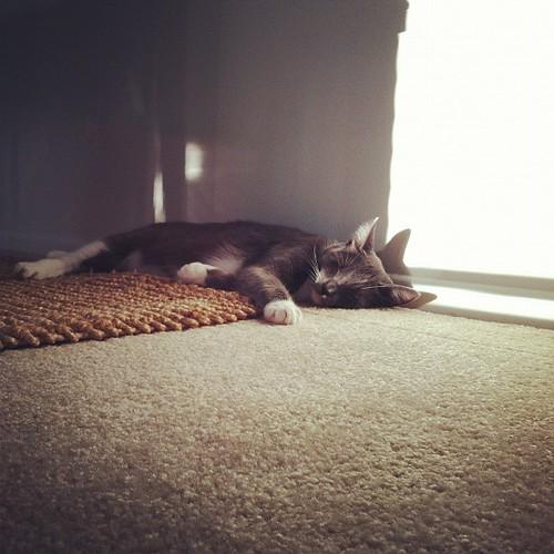 I know! More cat photos. I'm sorry.