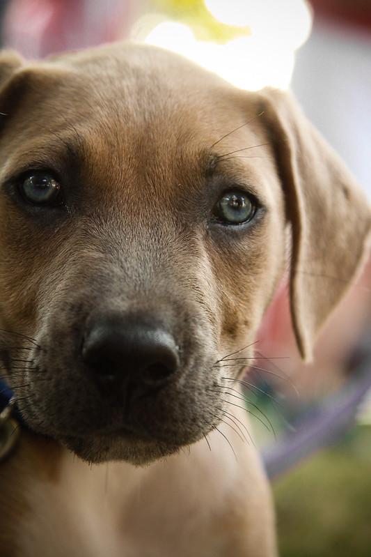 Puppy-2487