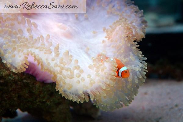 Singora Tram Tour - songkhla aquarium thailand-004