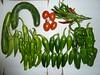 ブルーベリーヒル勝浦の農園で採れた野菜たち