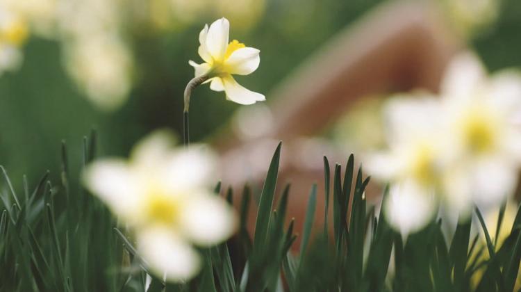 Daffodils - Jessie Ware750px