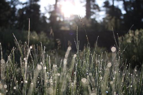 Glitter Grass
