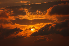 [Free Images] Nature, Sky, Clouds, Sunrise / Sunset, Animals - Standing ID:201208301200