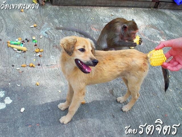 โรคไต น้องหมาคุยกับสุนัขตัวอื่นด้วยกันเองว่าป่วย