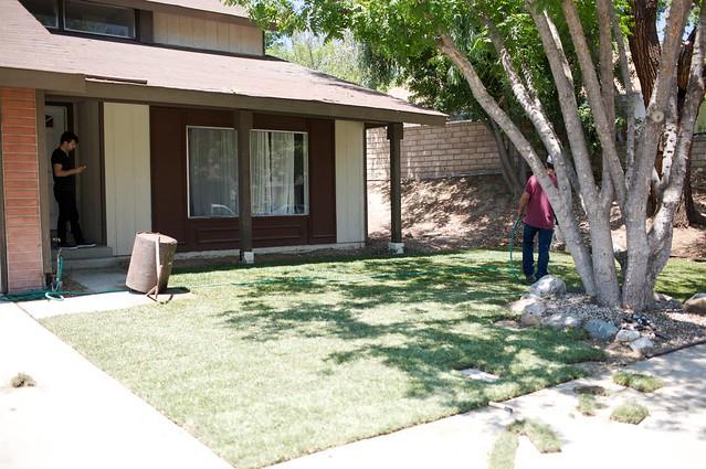 frontyard  017