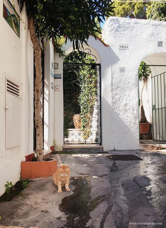 Dettagli di Capri