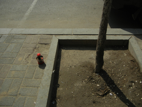 Flower Pot on Sidewalk, Shenyang _ 9052