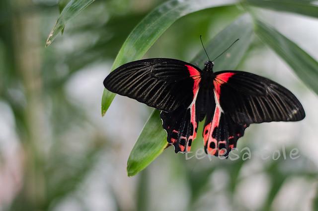 butterflies-1-6