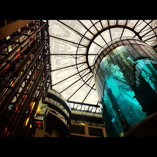 How crazy is this giant aquarium in our hotel lobby? No sharks though. =(