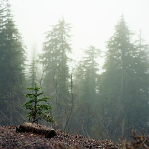 trees film fog analog mediumformat paradise kodak bad hasselblad rainier roadside 500cm ektar100 hotthenchillythenhotagain itsu2lyrics