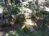Trace Samulaghja-Quercitella : abri dans la clairière