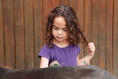 Eléanor prépare son poney