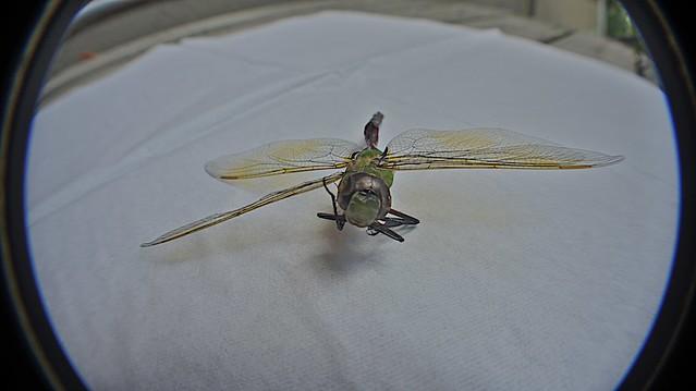 anteketborka.blogspot.com, libellule3