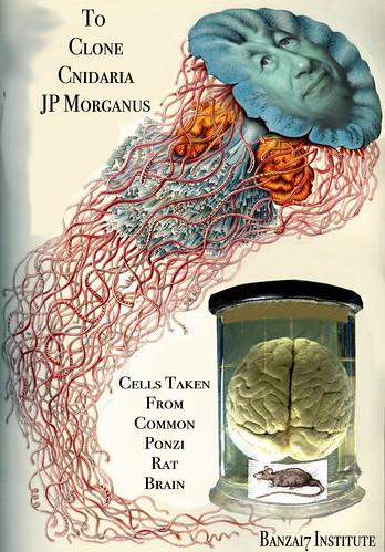 CLONING OF CNIDARIA JP MORGANUS by Colonel Flick