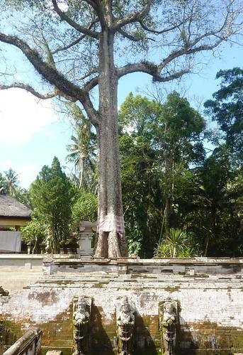 Bali-Route Batur-Ubud-Goa Gajah (6)