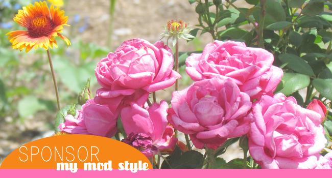 Sponsor Pic Flowers