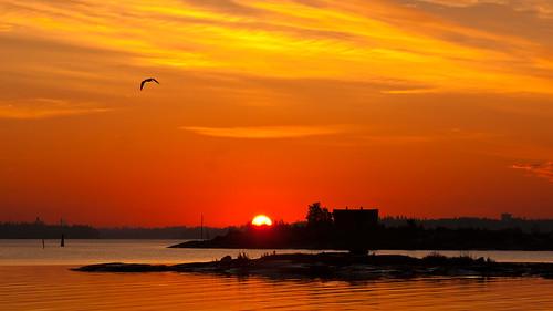 sea sunrise helsinki kaivopuisto bestcapturesaoi elitegalleryaoi mygearandme mygearandmepremium mygearandmebronze mygearandmesilver mygearandmegold