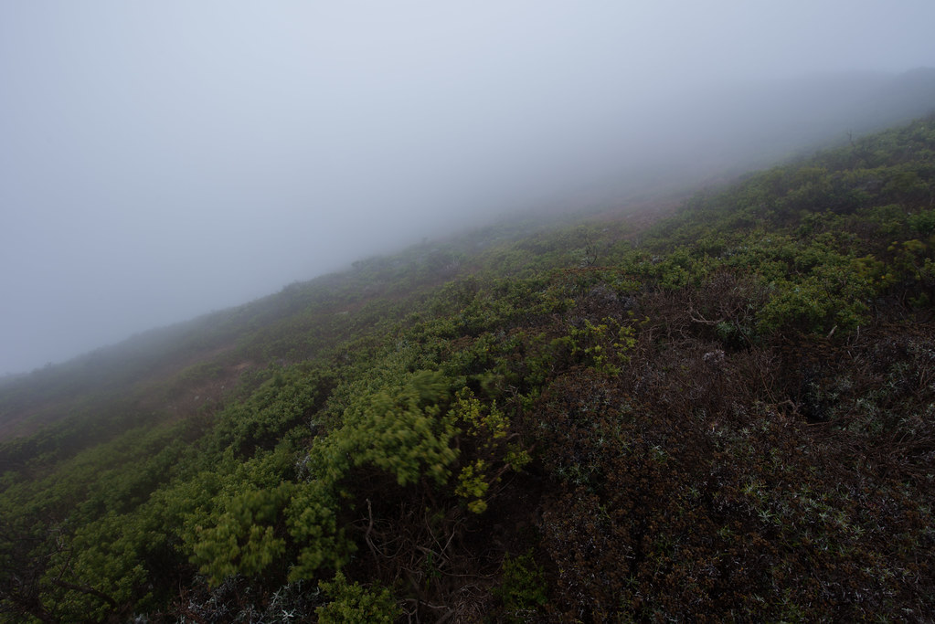 Exposure—from Marin's foggy head.