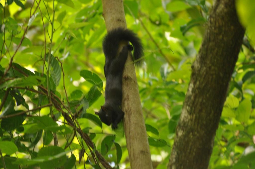 Parque Nacional de Manuel Antonio en Costa Rica Parque Nacional Manuel Antonio en Costa Rica, el más pequeño y más popular - 7734647710 5eb0eda2d6 o - Parque Nacional Manuel Antonio en Costa Rica, el más pequeño y más popular