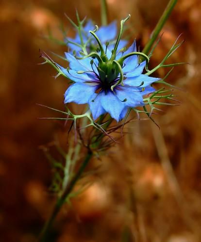 Blue Princess by Darwin Bell