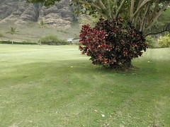 Makaha Valley Country Club 281