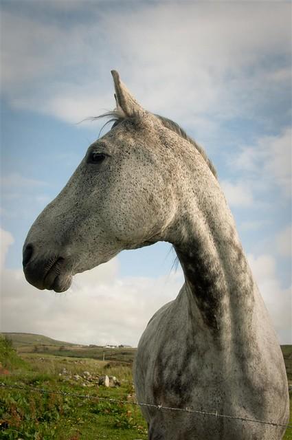 cleggan horse