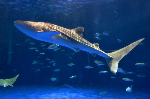 2012夏日大作戰 - 鹿児島 - かごしま水族館 (5)