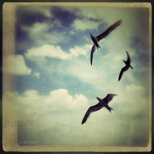 42:365 Open Wings by elineart
