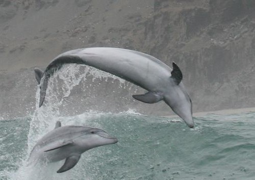 Dolphin watching in Peru with Nature Expeditions