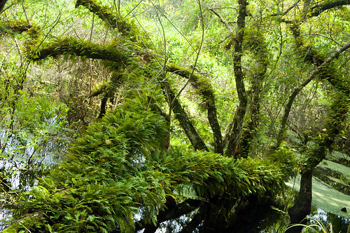 nature botanical outdoors florida infocus highquality ecopreserve elementsorganizer
