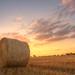 Wheat Bale in West Row, Suffolk by Meleah Reardon