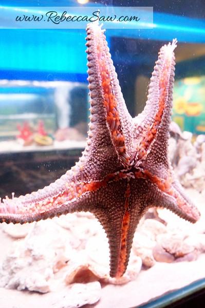 Singora Tram Tour - songkhla aquarium thailand-006