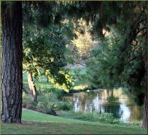 trees water grass palms landscape shade ponds redlandsca waterreflection fordpark dgrahamphoto
