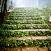 Misty steps in Amboli