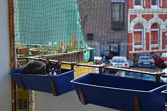 cat in Hamburg