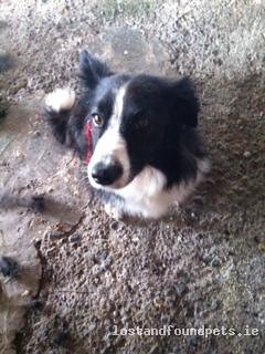 [Reunited Via Other Site] Sat, Aug 25th, 2012 Lost Female Dog - The Local Area, Kildare