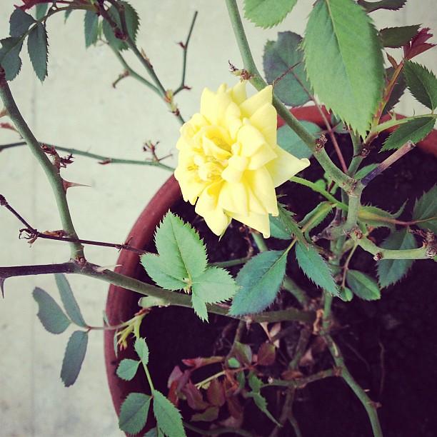 In full bloom. :)