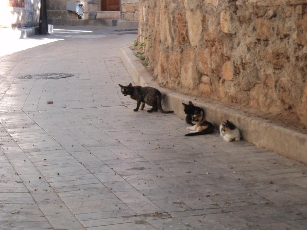 Вот эта кошка защищала своих котят и не пустила нас на эту улицу :)