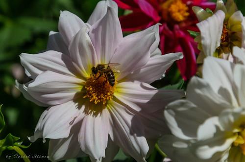 flower nature closeup bee summer