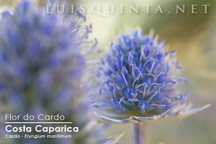 CardoBlog