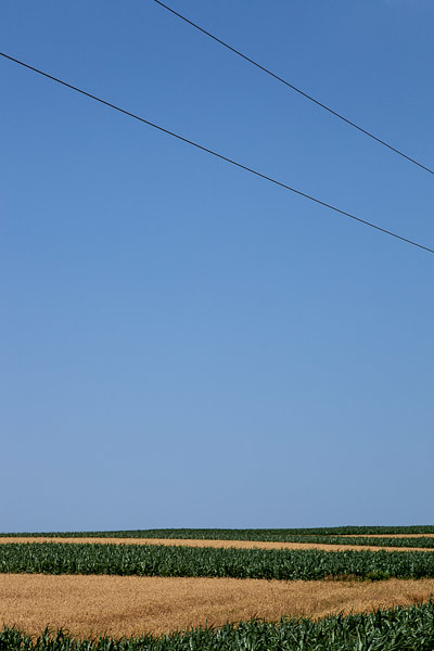 Telephone Wires in Iowa County, Wisconsin